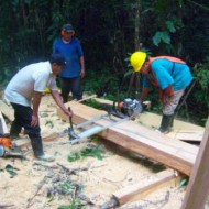 Forestry Project