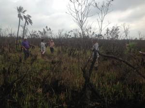 Fire damage to rare sphagnum moss.