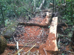 Signs of illegal logging